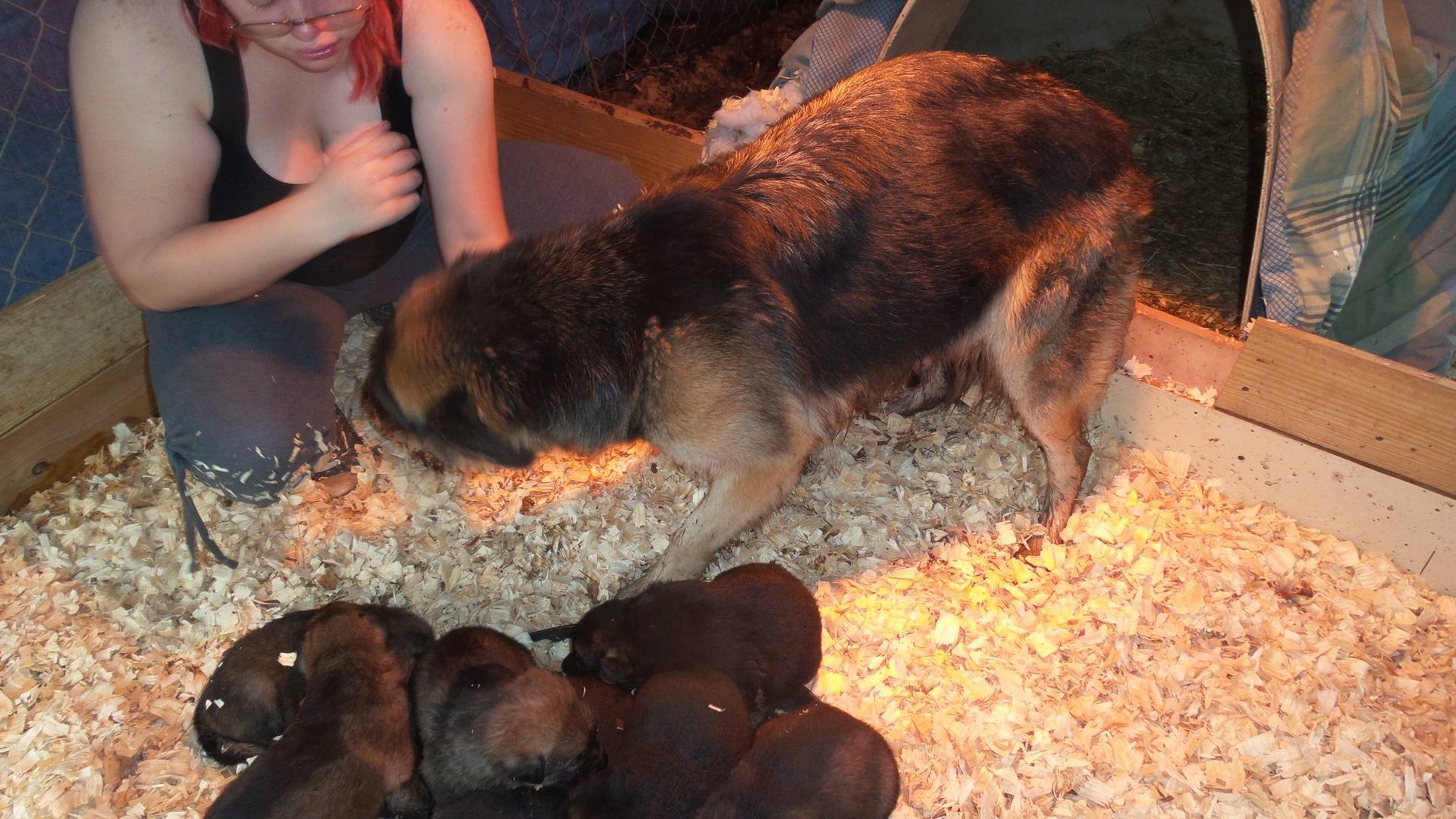 Numeria & Pups