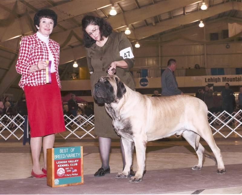 Lehigh Valley Kennel Club BOB