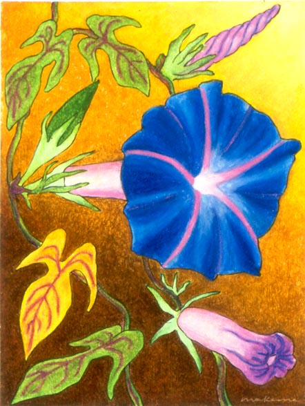 The Call of Spirit - Morning Glory, Oil Pastel, 11x14, Original Sold