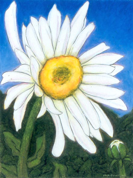 Secret Strength - Shasta Daisy, Oil Pastel, 11x14, Original Sold