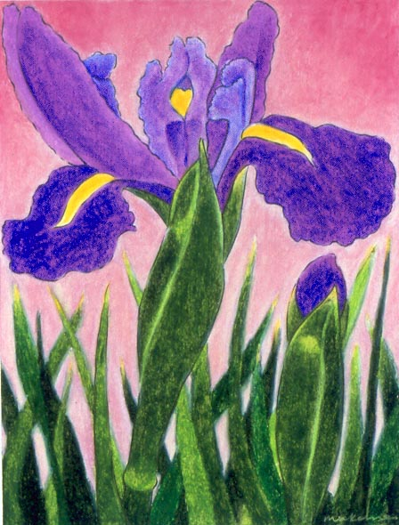 Sovereignty - Japanese Iris, Oil Pastel, 11x14, Original Sold