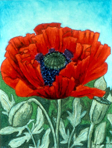 The Way of Peace - Poppy, Oil Pastel, 11x14, Original Sold