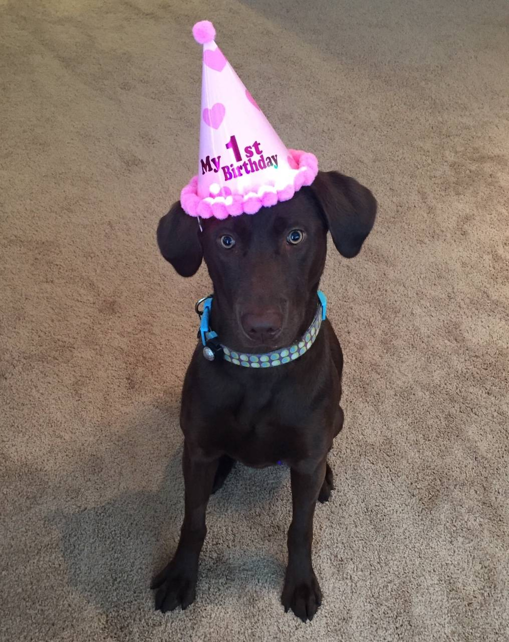 Beatrix on her 1st Birthday!!