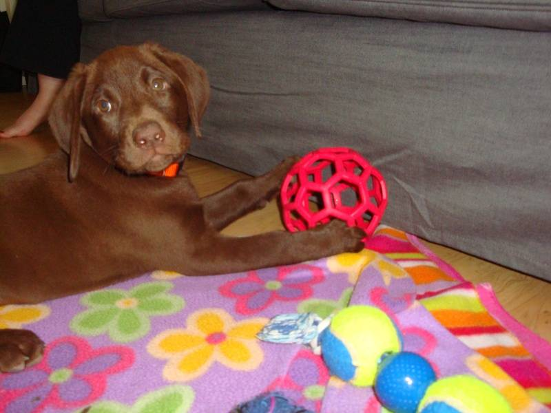 Cadbury at her new home