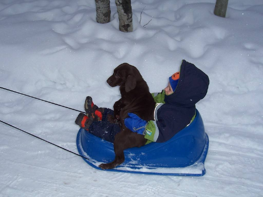 Keeva going for a ride with Karson