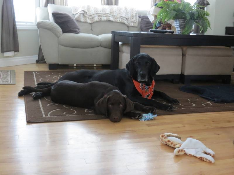 Molson and his brother Kramer