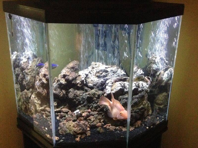 Arko's amazing aquascape!