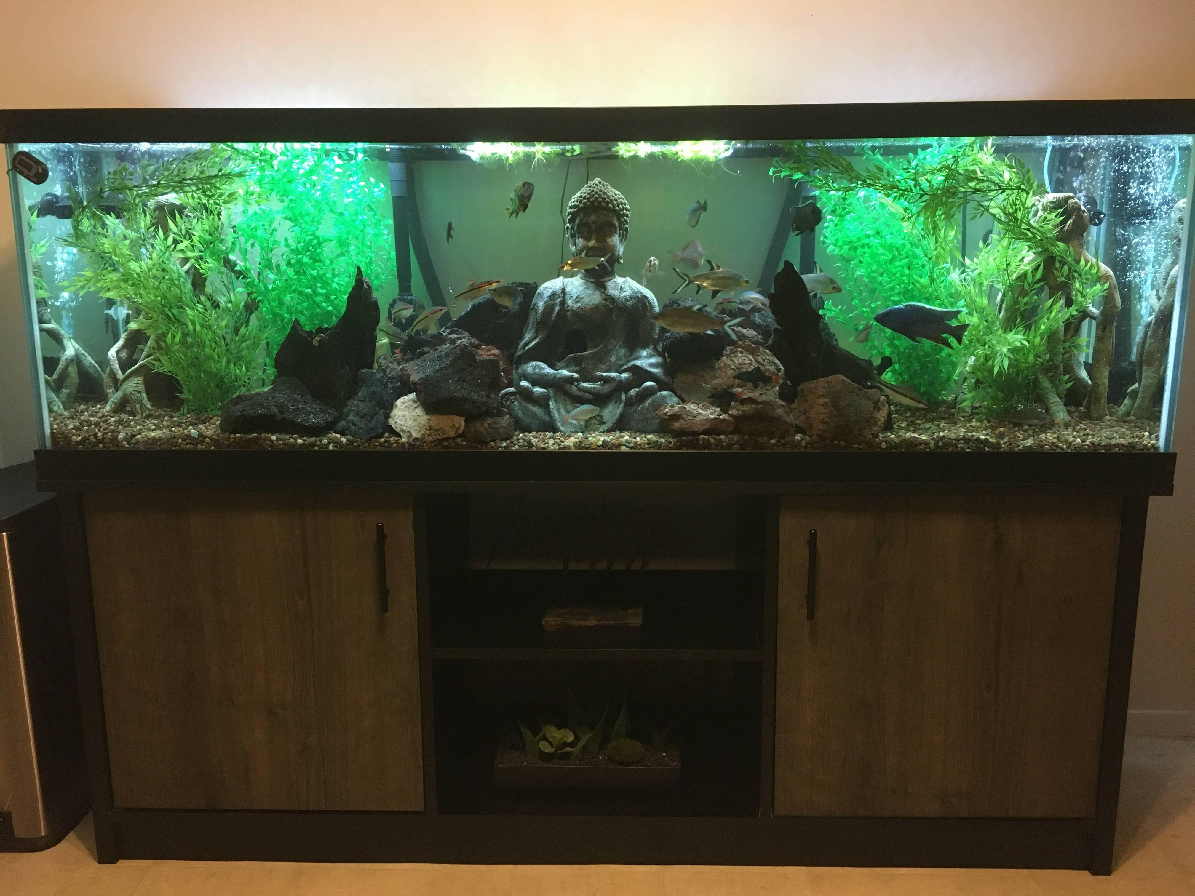 Heath's stunning aquascape