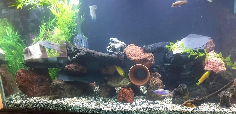Mike McGreal's aquascape!