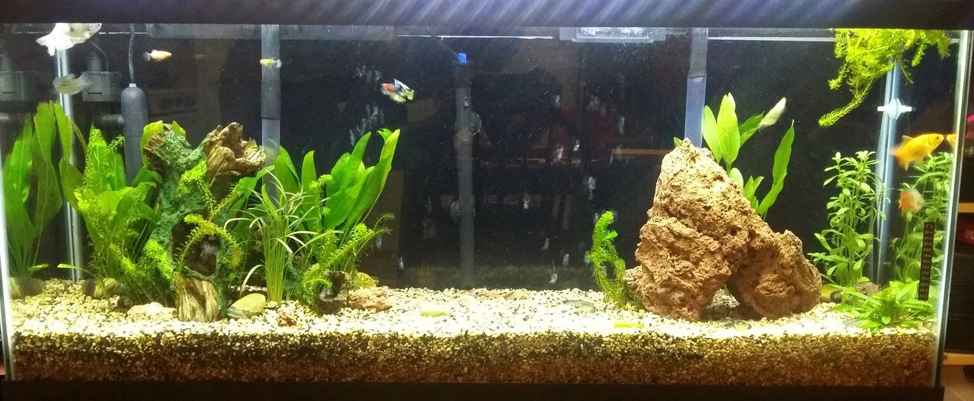 Avron's Amazing Aquascape