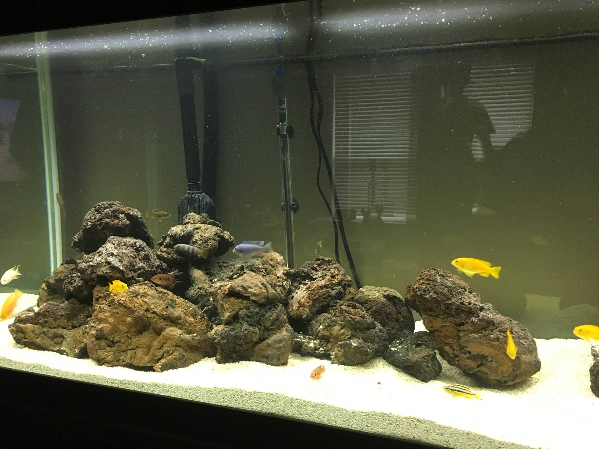 Christy's Amazing Cichlid Aquascape
