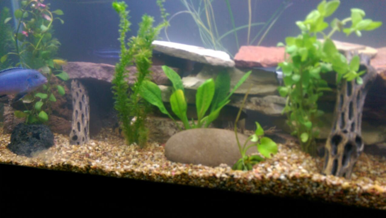 Ida's Beautiful Aquascape with our Flat Stones and Cholla Sticks