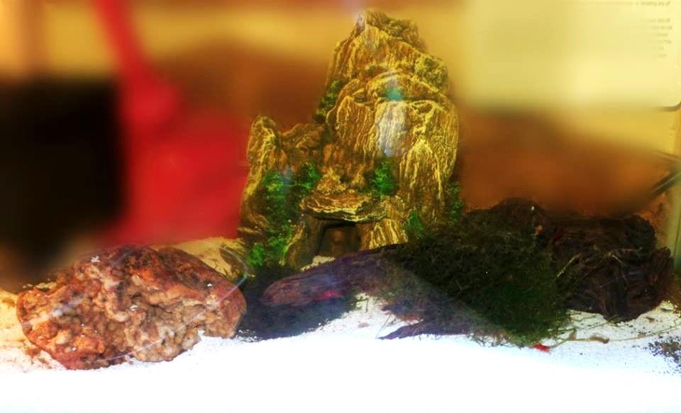 Isabella's amazing Shrimp tank