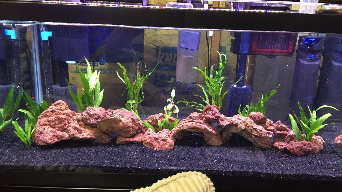 Ken Roberto's beautiful aquascape!