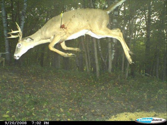 Nice Shot Caught On Trail Cam