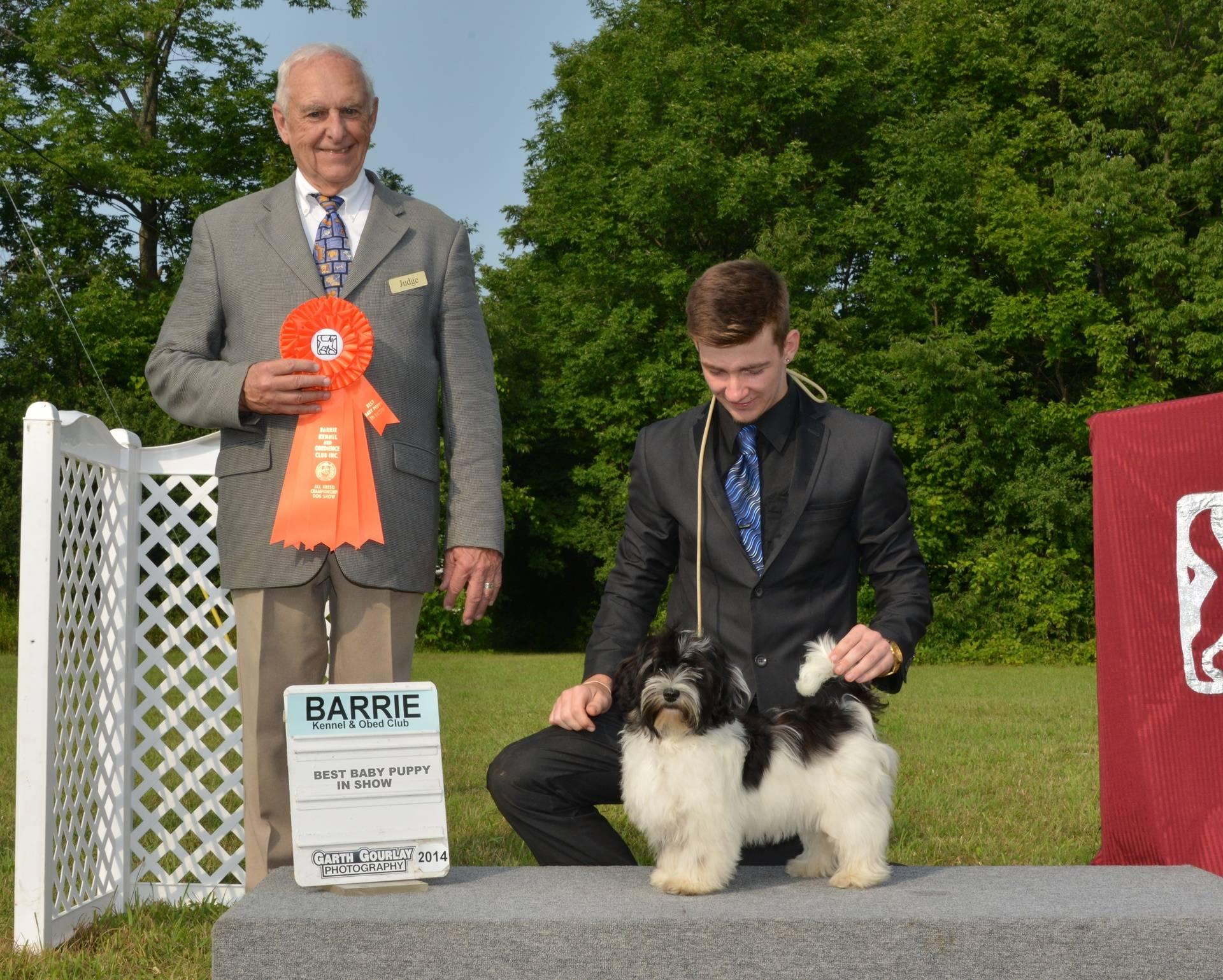 Saturday, August 2 - Best Baby Puppy In Show