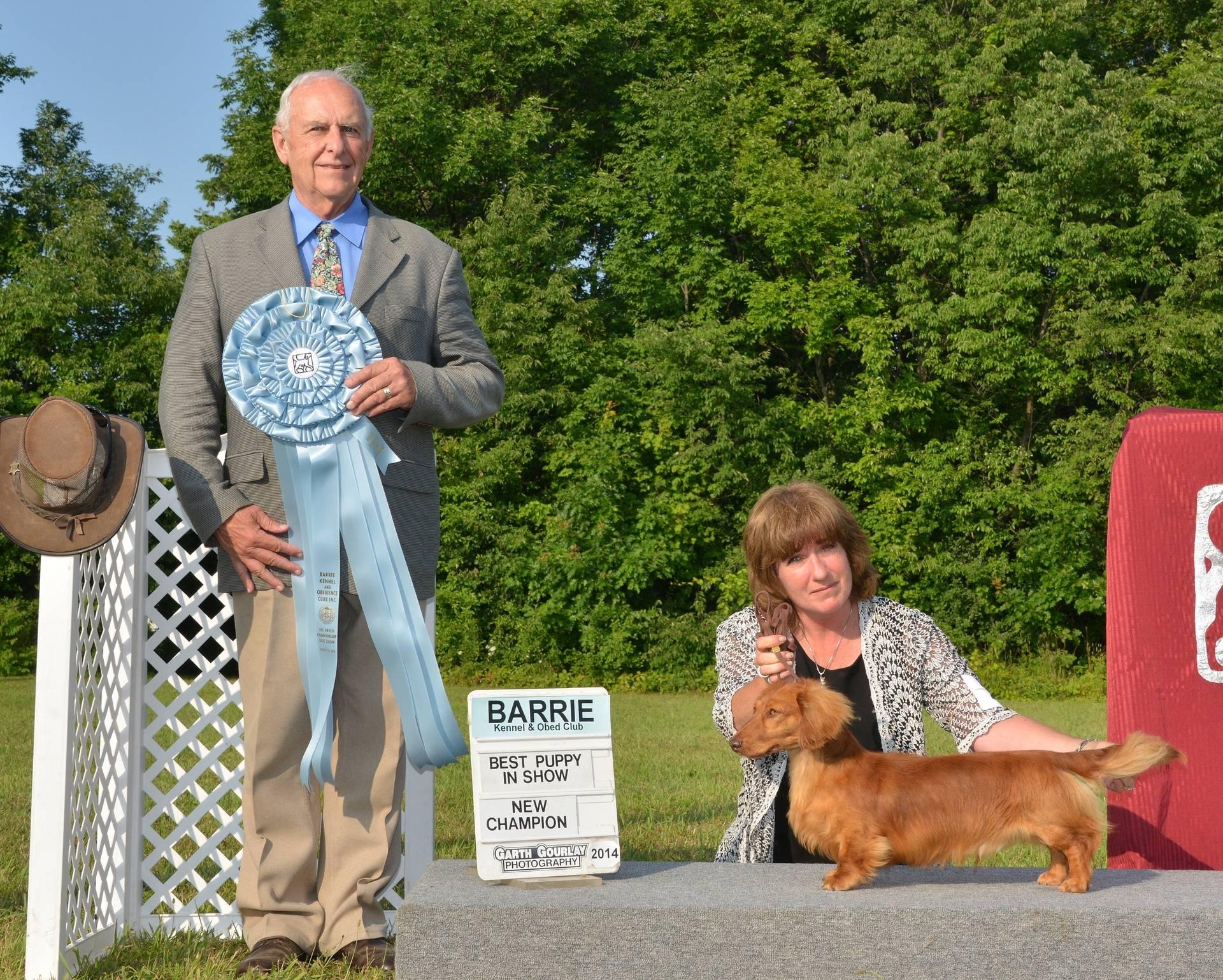 Saturday, August 2 - Best Puppy In Show