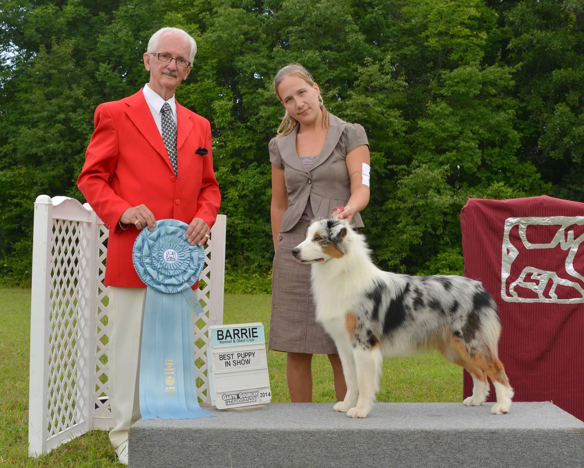 Monday, August 4 - Best Puppy in Show
