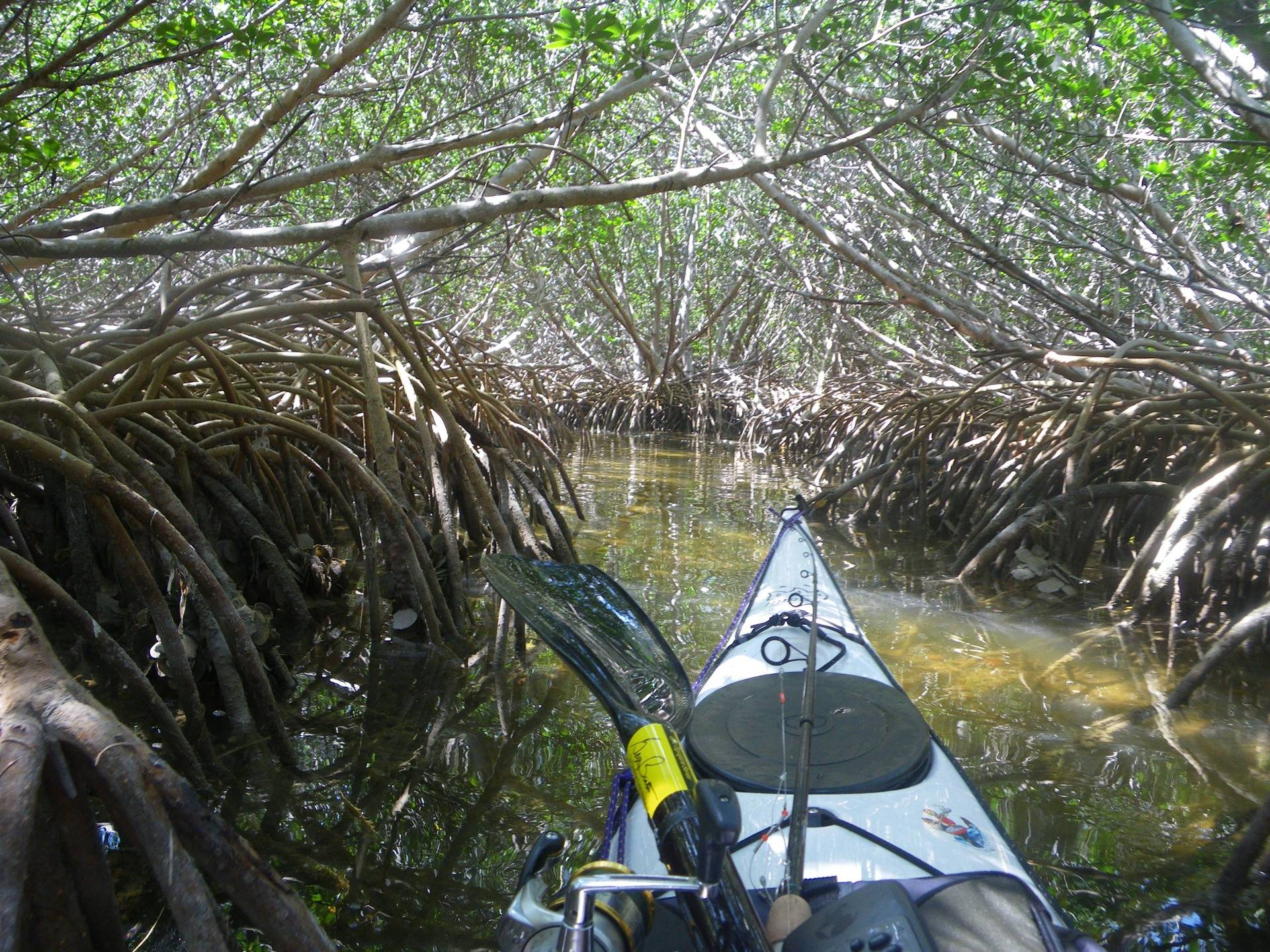 Mangroves in Florida Keys