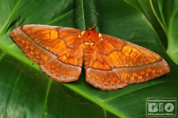 Mariposa PEI cod.2810