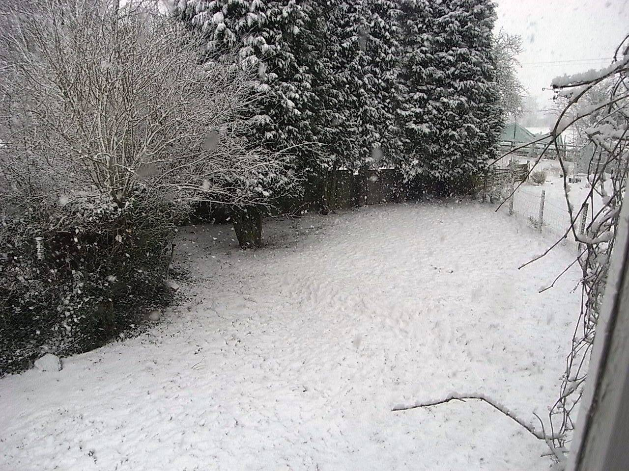 Snow Falling on the Garden