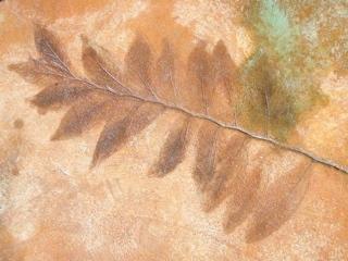 Stained leaf imprint on pooldeck.