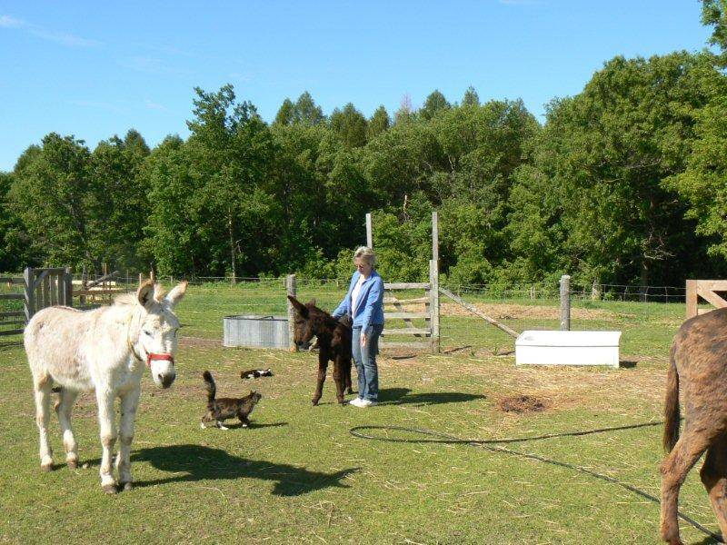 Susan giving Reiki to baby Lily and offering Reiki to Maris the cat too. Simon the donkey is waiting his turn