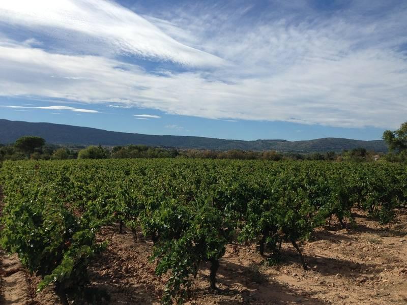 2013 - Vineyards