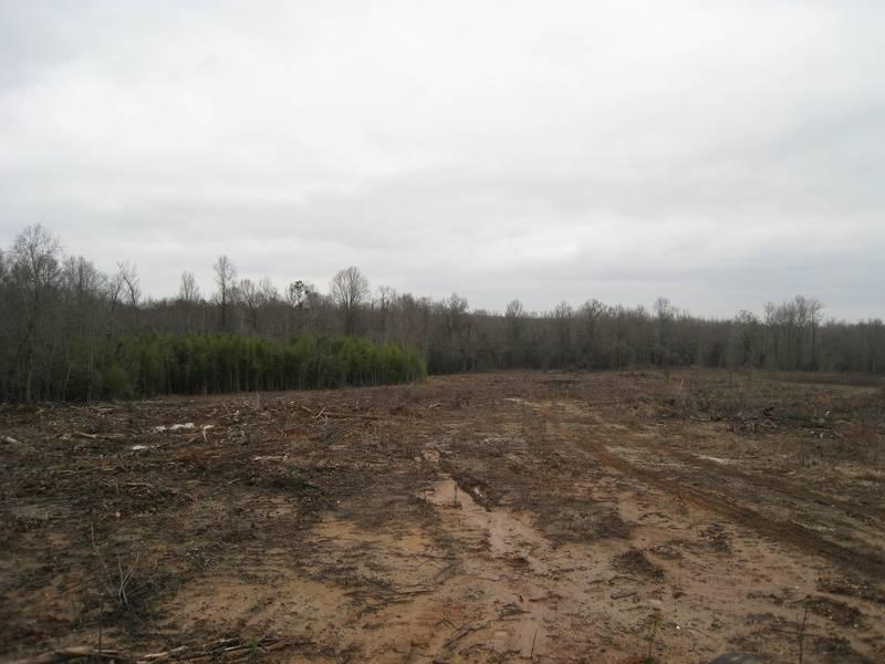 Timber Reforestation