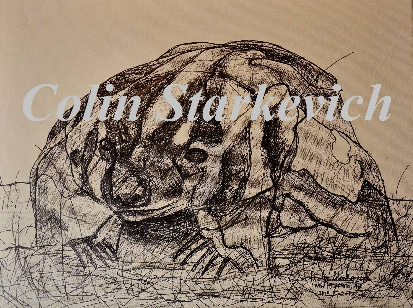 "Badger Erratic Drawing (12 by 16"" mixed media on canvas)"