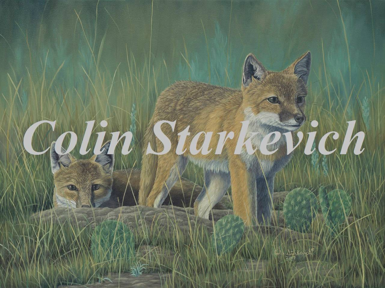 "Beating the Odds - Swift Fox (18 by 24"" oil on canvas)"