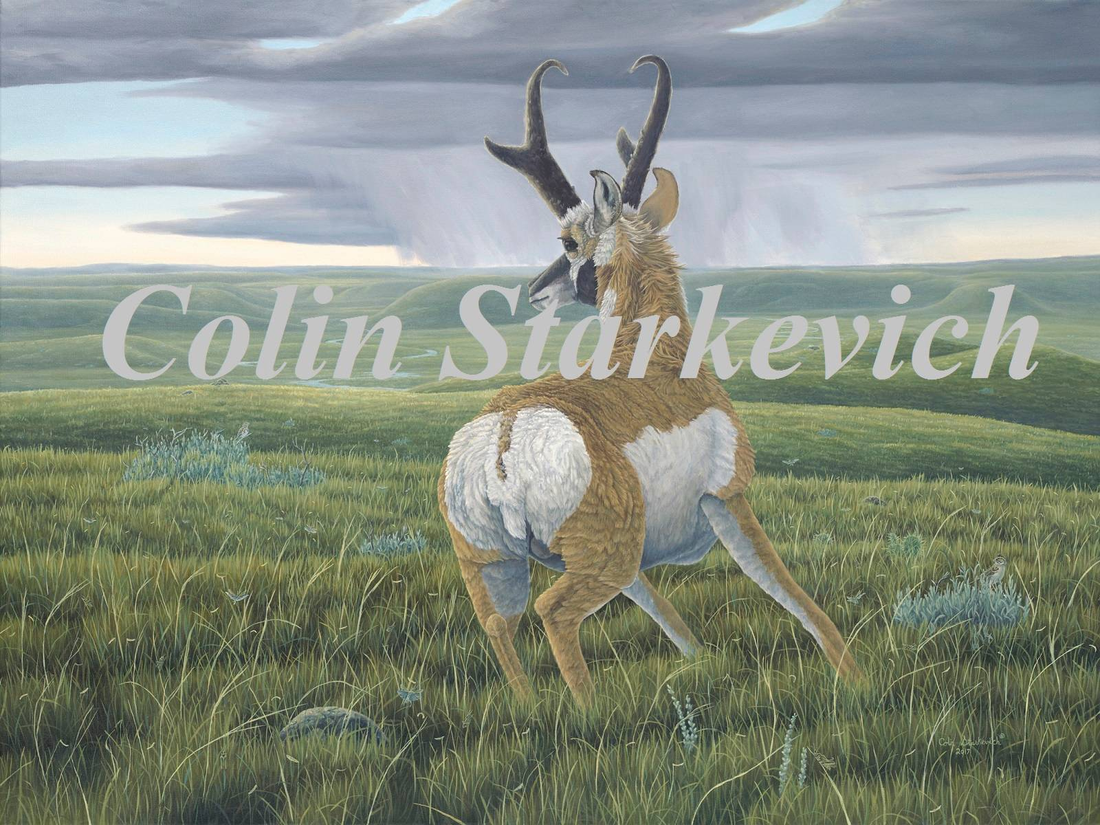 """Navigation - Pronghorn (30 by 40"""" oil on canvas)"""