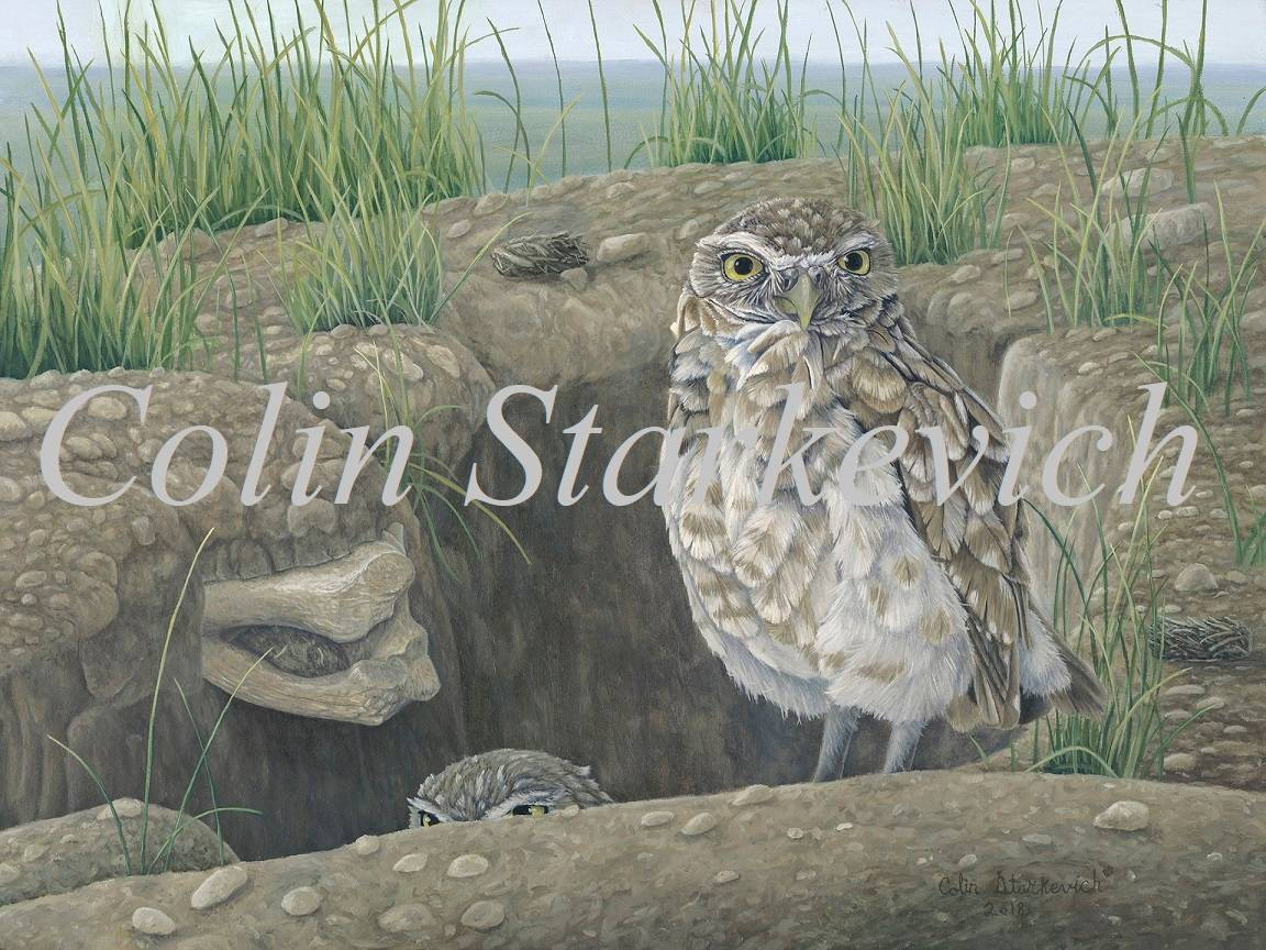"Intimate Reminder - Burrowing Owls (12 by 16"" oil on masonite) In Private Collection"