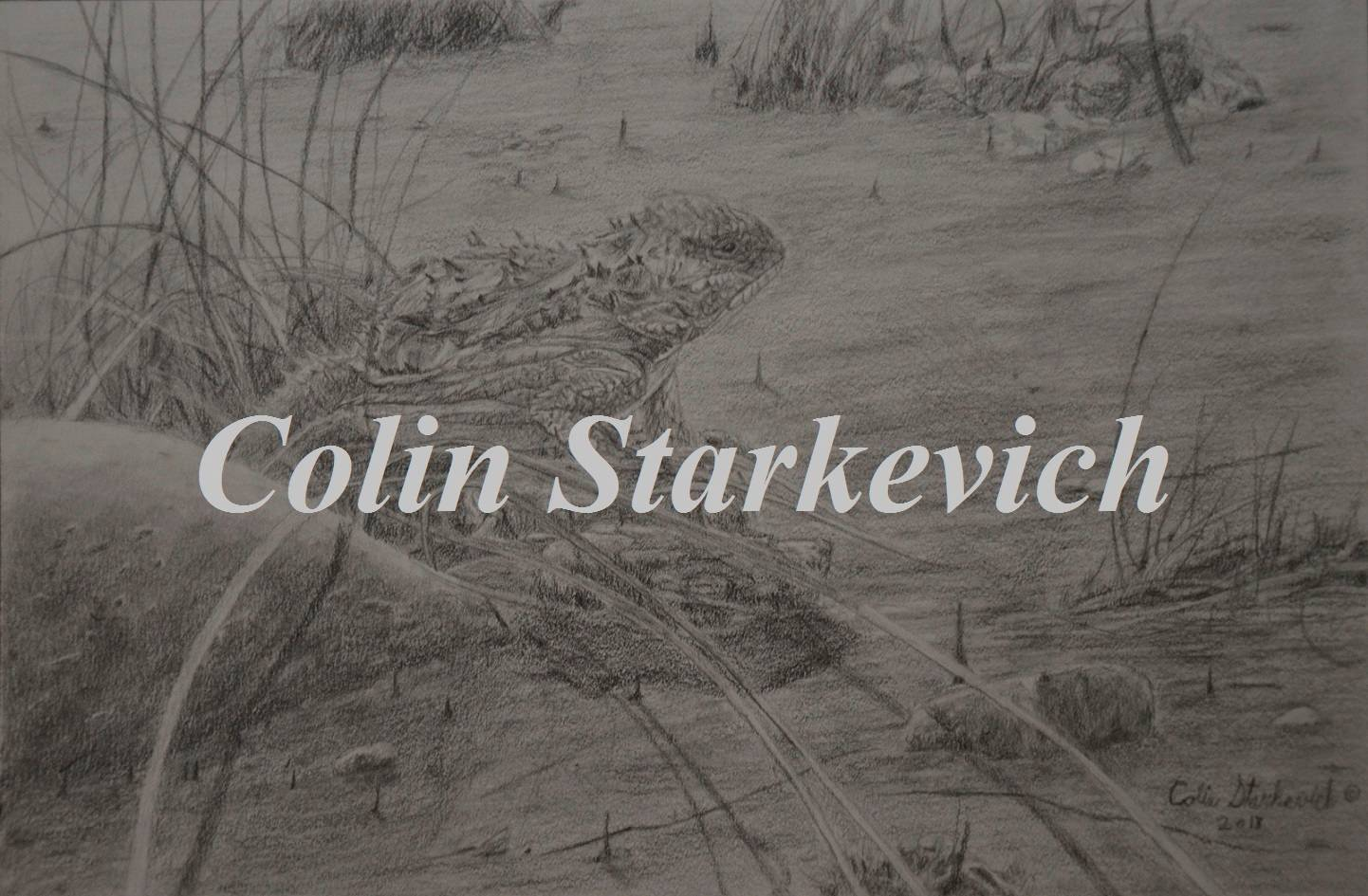 "Short-horned Lizard (7 3/4 by 12"" pencil drawing) In Private Collection"