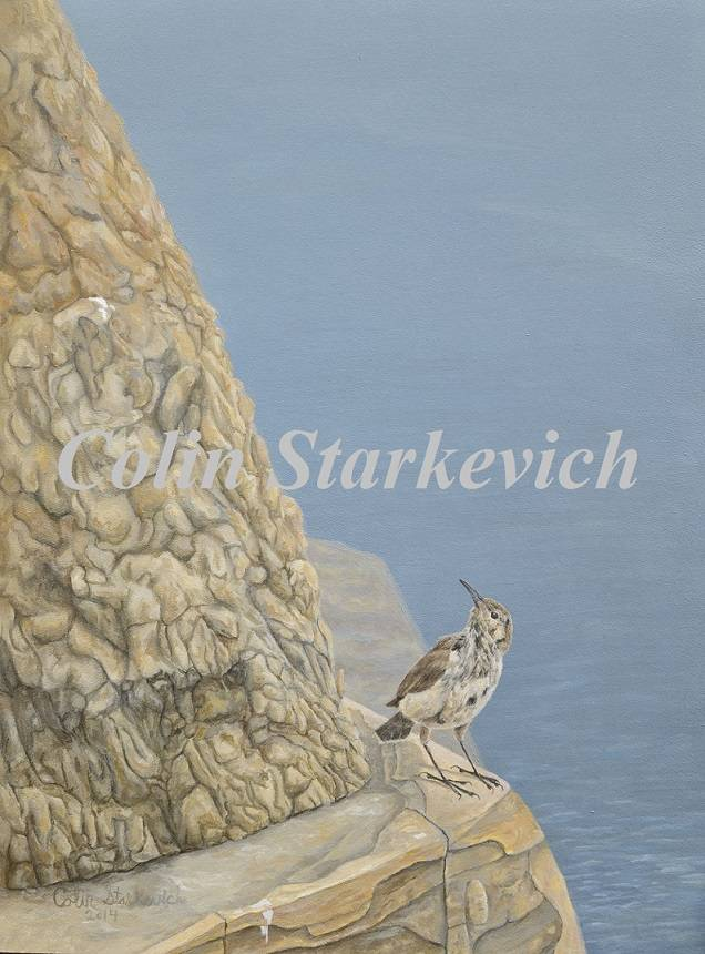 "Rock Wren Above the South Saskatchewan (16 by 12"" acrylic on masonite)"