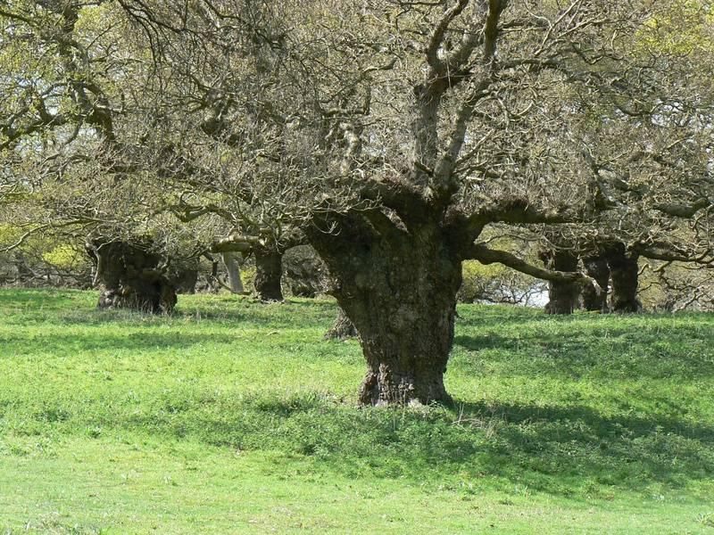 Staverton Park - Suffolk