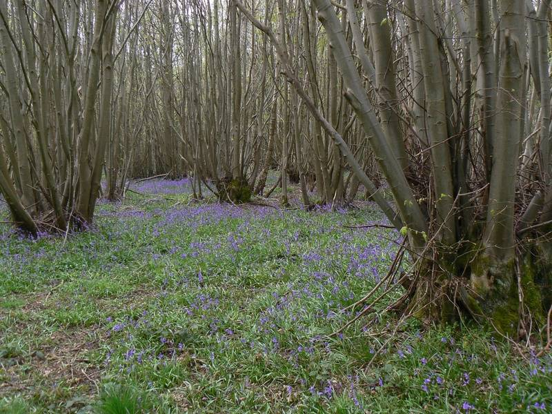 Groton Wood Nature Reserve - Suffolk