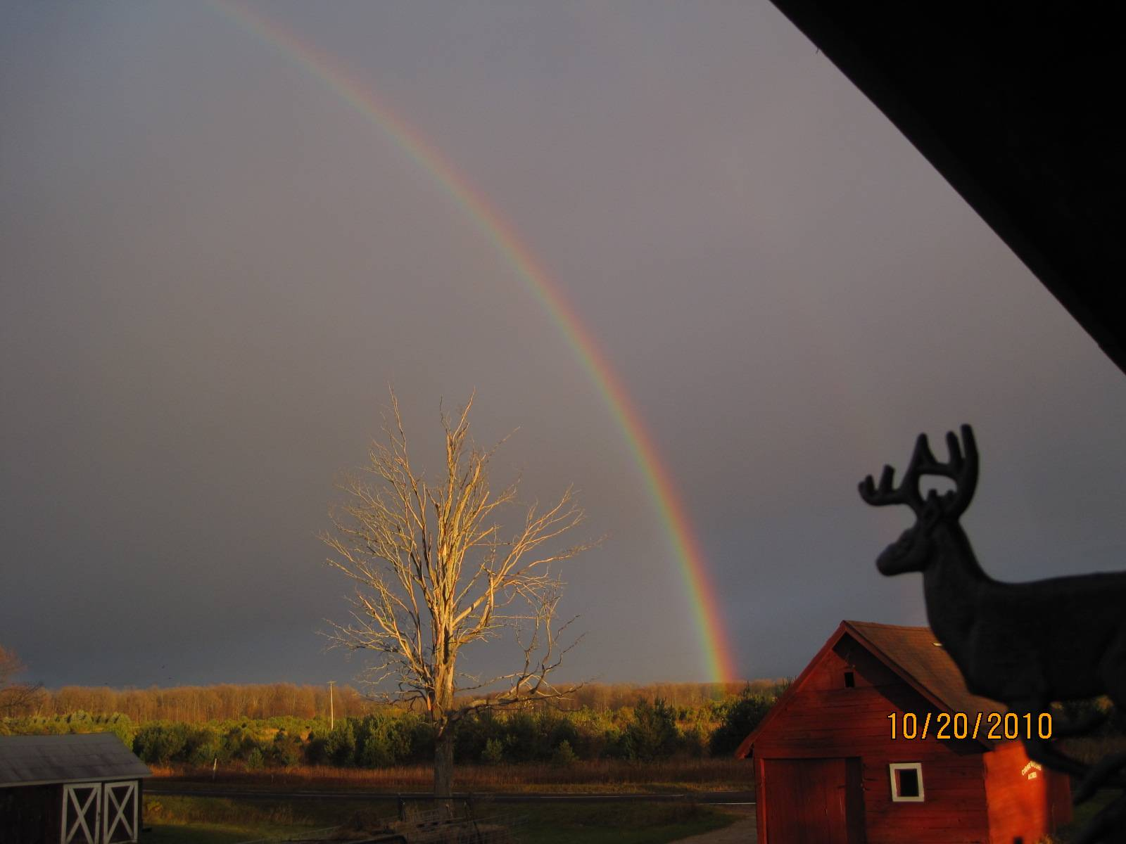 A rainbow and The Tree