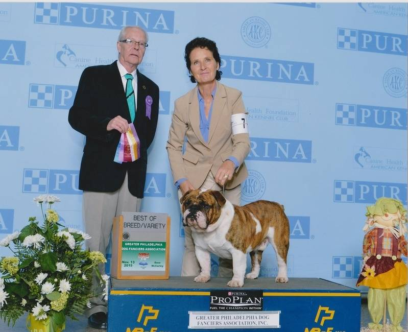 D and D's Rufus Rufus is Champion Pointed