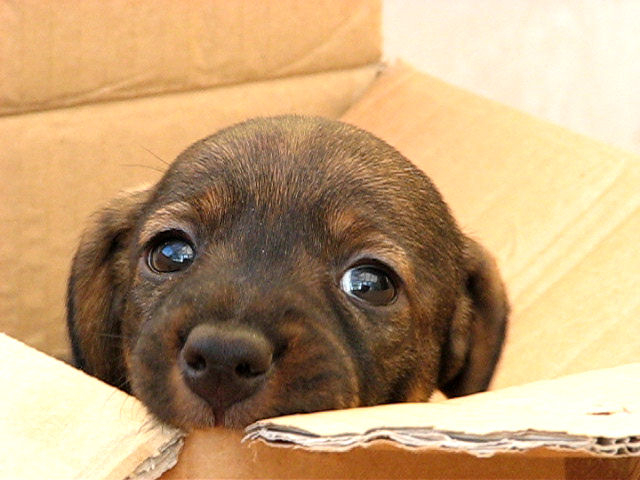 pup in box 2