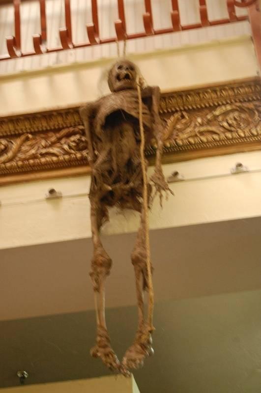Bucky Skeleton (Andy)