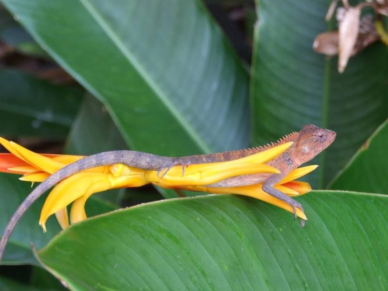 Zoek de salamander