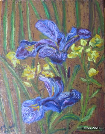 Wild Water-Irises