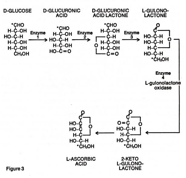 L-Ascorbic Acid Metabolic Pathway