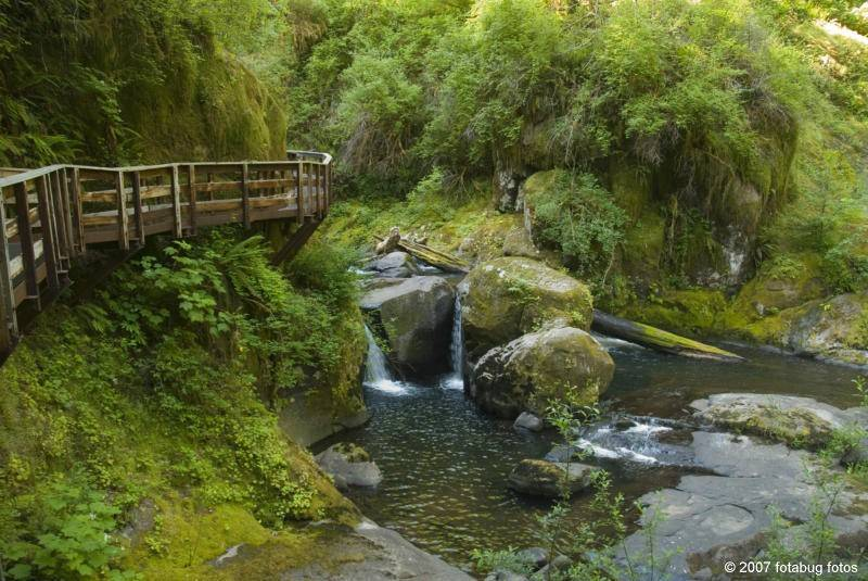 At Sweet Creek Falls Park