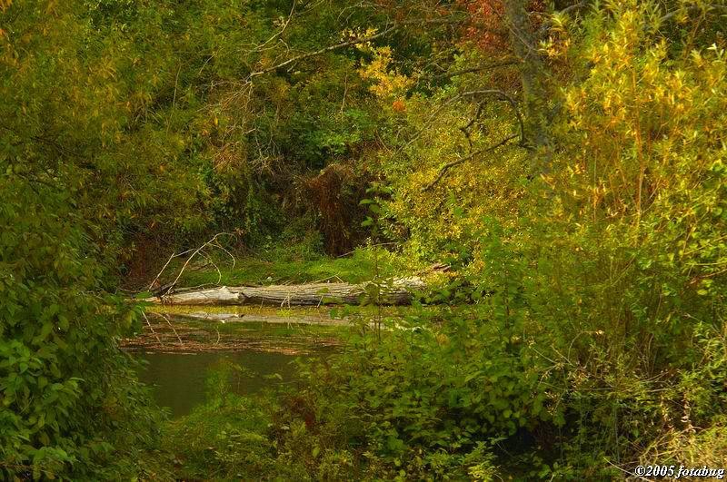 Scene in Delta Ponds
