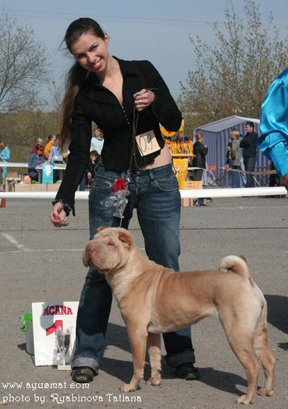 "Russian National Dog Show ""Image"" - 24.04.2010, Volgograd, Russia"