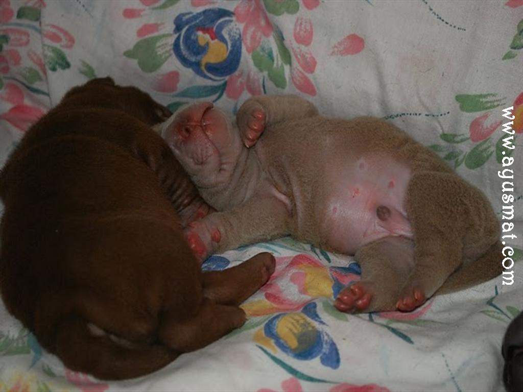 Choco&Lilac