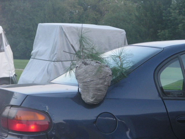 Bee Hive on Kathies car