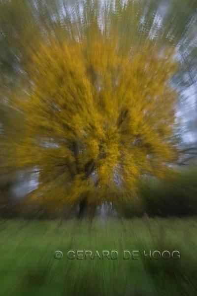 beuk met herfstkleuren